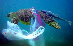 Turtle entangled in plastic.